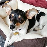 Adopt A Pet :: Kyoko - Richardson, TX