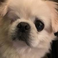 Adopt A Pet :: Stuart - West Allis, WI