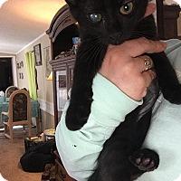 Adopt A Pet :: Peyton - Tampa, FL
