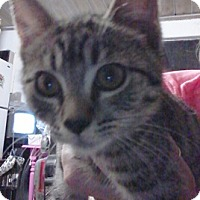 Adopt A Pet :: Shimmer - North Highlands, CA