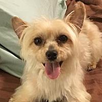 Adopt A Pet :: Rafferty - McKinney, TX