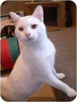 Domestic Shorthair Cat for adoption in Marion, Wisconsin - Casper