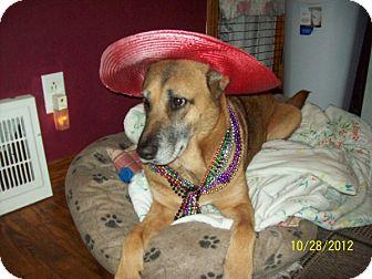 German Shepherd Dog Mix Dog for adoption in Elyria, Ohio - Aurora-ES Dog