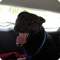 Adopt A Pet :: TREY SURRY - Southampton, PA