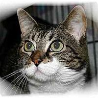 Adopt A Pet :: Babycakes - Montgomery, IL