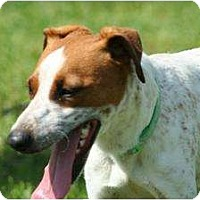 Adopt A Pet :: Rusty in Louisiana - Houston, TX