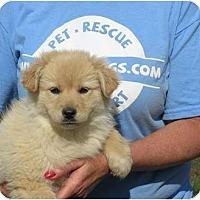 Adopt A Pet :: Trudy - Westbrook, CT
