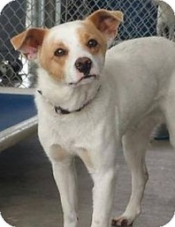 Terrier (Unknown Type, Medium) Mix Dog for adoption in Sunnyvale, California - Duncan