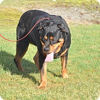 Adopt A Pet :: Nani - Tumwater, WA