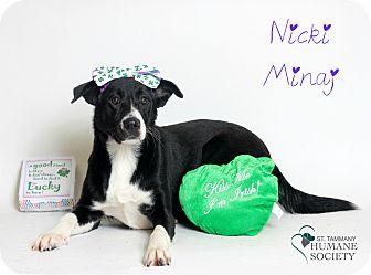Border Collie Mix Puppy for adoption in Covington, Louisiana - Nicki Minaj