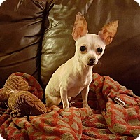 Adopt A Pet :: Twinkie - Romeoville, IL