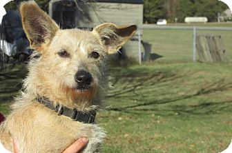 Terrier (Unknown Type, Small) Mix Dog for adoption in Rocky Mount, North Carolina - Reena