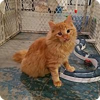Adopt A Pet :: Sunflower - Geneseo, IL