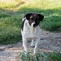 Adopt A Pet :: Chancey - Quinlan, TX