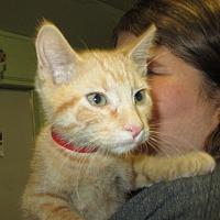 Adopt A Pet :: Colton - Reeds Spring, MO