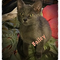Adopt A Pet :: Bailey - Cleveland, TN