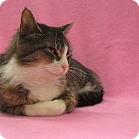 Adopt A Pet :: Snickers - Redwood Falls, MN