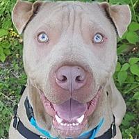 Adopt A Pet :: Julian - Bloomington, IL