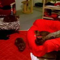 Adopt A Pet :: Mi Shu - Brooksville, FL