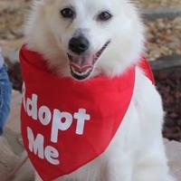 Adopt A Pet :: Luna - Suwanee, GA