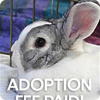 Adopt A Pet :: Judy - Novato, CA