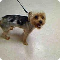 Adopt A Pet :: King - Antioch, IL