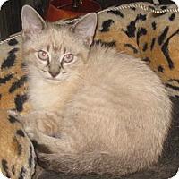 Adopt A Pet :: Larimar - Dallas, TX