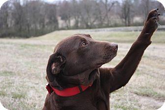 Labrador Retriever Mix Dog for adoption in Westport, Connecticut - *Brady - PENDING