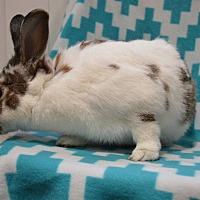 Adopt A Pet :: Jake - Erie, PA