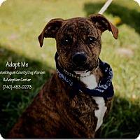 Adopt A Pet :: Kismit - ADOPTED! - Zanesville, OH