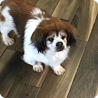 Adopt A Pet :: Yoshi - Brooksville, FL