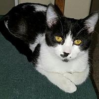 Adopt A Pet :: Anna - San Dimas, CA