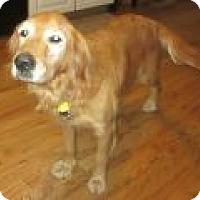 Adopt A Pet :: Petunia - Denver, CO