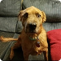 Adopt A Pet :: Luna - Fayette City, PA