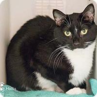 Adopt A Pet :: Hollis - Merrifield, VA