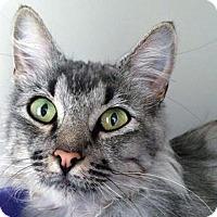 Adopt A Pet :: Paris - Prescott, AZ