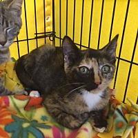 Adopt A Pet :: Lucy - San Jose, CA