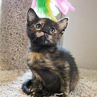 Adopt A Pet :: Roo - ROWLETT, TX