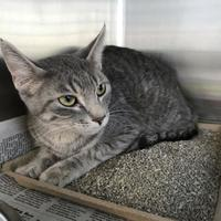 Adopt A Pet :: Riot - Wausau, WI