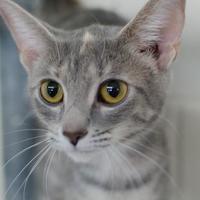 Adopt A Pet :: Kamree - Greenwood, SC