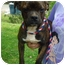 Photo 2 - Boston Terrier Mix Dog for adoption in Londonderry, New Hampshire - Nelson