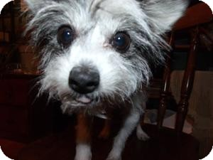 Terrier (Unknown Type, Small) Mix Dog for adoption in Rocky Mount, North Carolina - Sydney