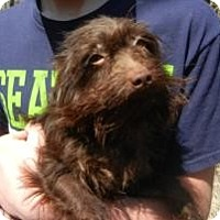 Adopt A Pet :: Gremlin - ADOPTED!! - Antioch, IL