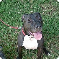 Adopt A Pet :: MARLEY - Mission Hills, CA