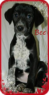 Terrier (Unknown Type, Medium)/Border Collie Mix Puppy for adoption in Newnan, Georgia - Bee