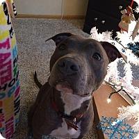 Adopt A Pet :: Navy - Hilliard, OH
