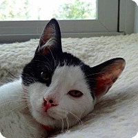 Adopt A Pet :: Puffin - Colmar, PA