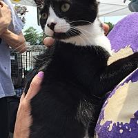 Adopt A Pet :: Louise - Trenton, NJ
