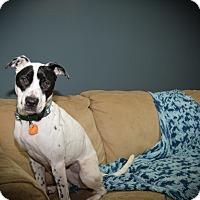 Adopt A Pet :: Dallas - Muskegon, MI