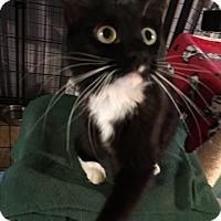 Adopt A Pet :: Margo Gru-ADOPTED! - Tracy, CA